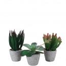 Succulent planted, 3 motives, H15-24,5cm, green